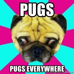 Perplexed Pug - PUGS PUGS EVERYWHERE