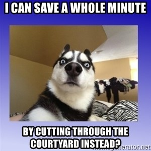 Dog Surprise - i can save a whole minute by cutting through the courtyard instead?