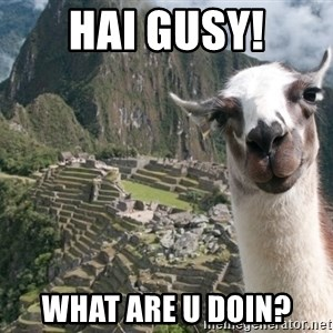 Bossy the Llama - HAI GUSY! WHAT ARE U DOIN?
