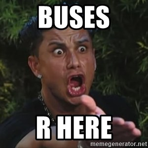 Pauly D - BUSES R HERE