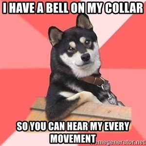 Cool Dog - i have a bell on my collar so you can hear my every movement