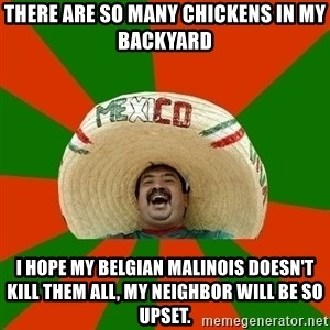 Successful Mexican - there are so many chickens in my backyard i hope my belgian malinois doesn't kill them all, my neighbor will be so upset.