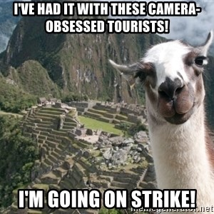 Bossy the Llama - I've had it with these camera-obsessed tourists! i'm going on strike!