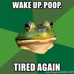 Foul Bachelor Frog - wake up. Poop. tired again