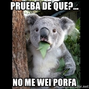 Koala can't believe it - prueba de que?... no me wei porfa