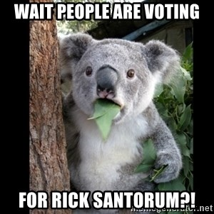 Koala can't believe it - wait people are voting for rick santorum?!