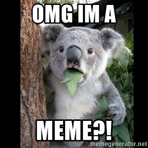 Koala can't believe it - omg im a meme?!