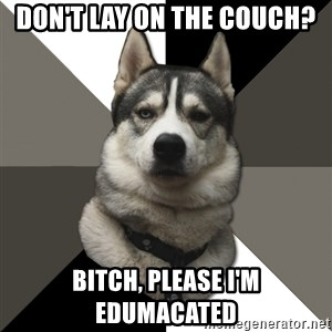 Wise Husky - Don't lay on the couch? BiTch, please I'm edumacated