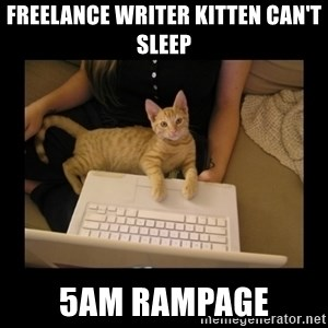 Freelance Writer Kitten - freelance writer kitten can't sleep 5am rampage