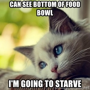 First World Problems Cat - can see bottom of food bowl i'm going to starve