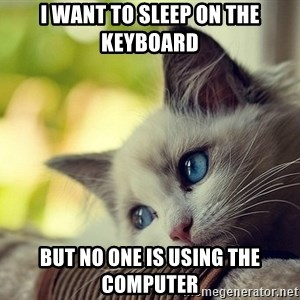 First World Problems Cat - i want to sleep on the keyboard but no one is using the computer