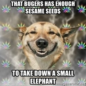 Stoner Dog - that bugers has enough sesame seeds to take down a small elephant