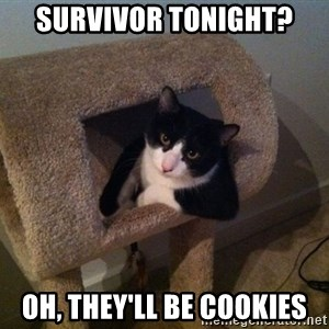 cool cat - survivor tonight? Oh, They'll be cookies