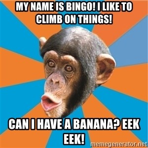 Stupid Monkey - My name is bingo! I like to climb on things! Can I have a banana? Eek Eek!