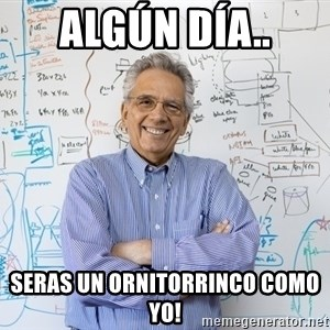 Engineering Professor - ALGÚN DÍA.. SERAS UN ORNITORRINCO COMO YO!