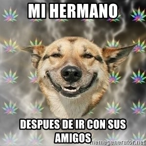 Stoner Dog - mi hermano despues de ir con sus amigos