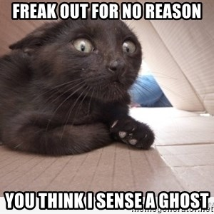 Paranoid cat - freak out for no reason you think i sense a ghost