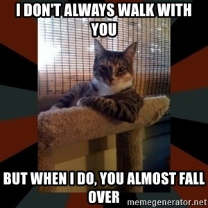 The Most Interesting Cat in the World - I don't always walk with you but when i do, you almost fall over