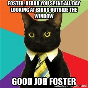 BusinessCat - Foster, heard you spent all day looking at birds outside the window Good job foster