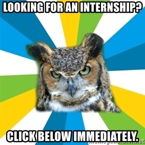 Old Navy Owl - looking for an internship? Click below immediately.
