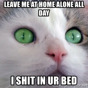 Psychotic Housecat - leave me at home alone all day I shit in ur bed