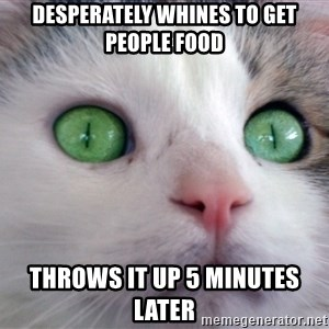 Psychotic Housecat - Desperately Whines to get people food throws it up 5 minutes later