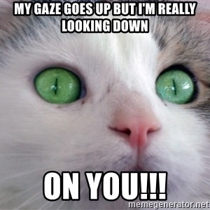 Psychotic Housecat - My gaze goes up but I'm really looking down on you!!!