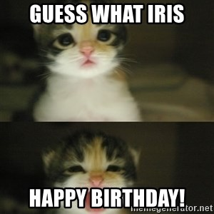 Adorable Kitten - Guess what Iris HAPPY BIRTHDAY!