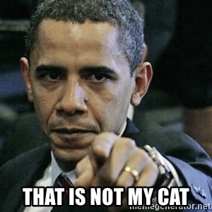 Pissed off Obama - that is not my cat