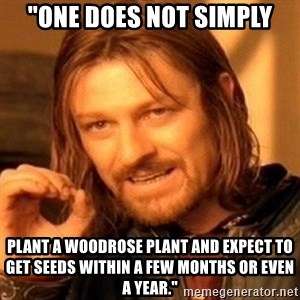 "One Does Not Simply - ""one does not simply PLANT A WOODROSE PLANT AND EXPECT TO GET SEEDS WITHIN A FEW MONTHS OR EVEN A YEAR."""