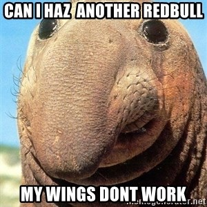 Lolwut - Can i haz  another redbull My wings dont work