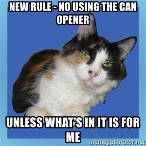 Sees It All Cat - New rule - no using the can opener unless what's in it is for me