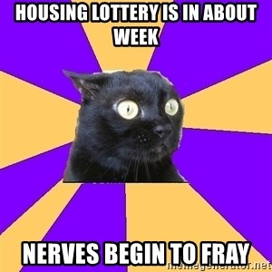Anxiety Cat - housing lottery is in about week nerves begin to fray