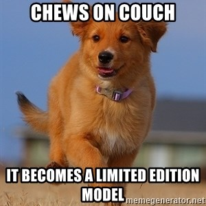 Ridiculously Photogenic Puppy - chews on couch it becomes a limited edition model