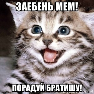 HAPPY KITTEN - Заебень мем! порадуй братишу!
