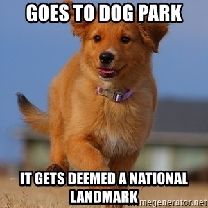 Ridiculously Photogenic Puppy - goes to dog park it gets deemed a national landmark