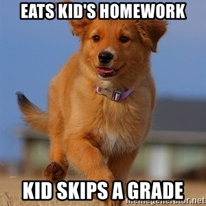 Ridiculously Photogenic Puppy - eats kid's homework kid skips a grade