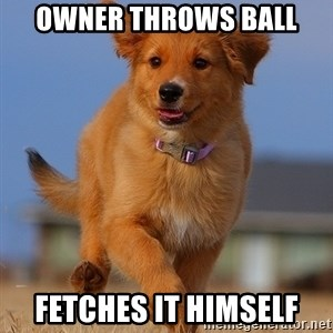 Ridiculously Photogenic Puppy - owner throws ball fetches it himself