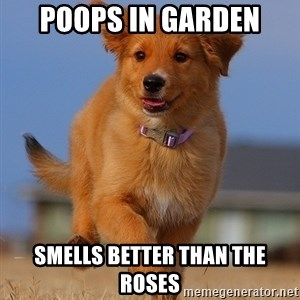 Ridiculously Photogenic Puppy - poops in garden smells better than the roses