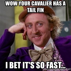 Willy Wonka - wow your cavalier has a tail fin i bet it's so fast...