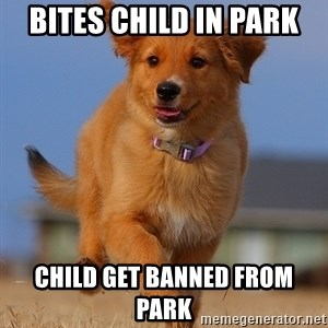 Ridiculously Photogenic Puppy - Bites child in park child get banned from park