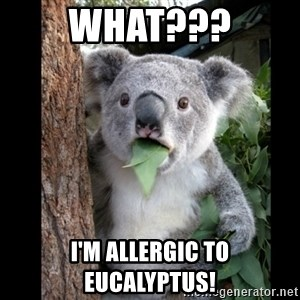 Koala can't believe it - What??? I'm allergic to eucalyptus!