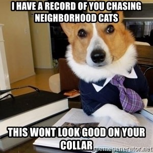 Dog Lawyer - I have a record of you chasing neighborhood cats this wont look good on your collar