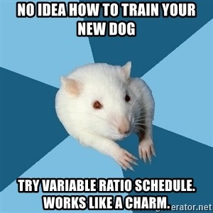 Psychology Major Rat - no idea how to train your new dog try variable ratio schedule. works like a charm.