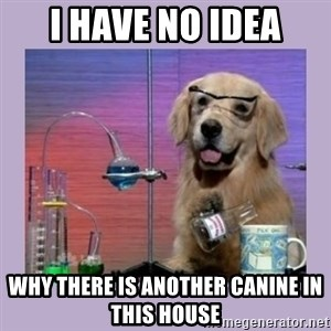 Dog Scientist - I HAVE NO IDEA WHY THERE IS ANOTHER CANINE IN THIS HOUSE