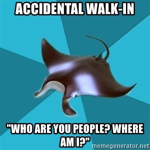 """Multiple Manta - Accidental walk-in """"Who are you people? Where am I?"""""""