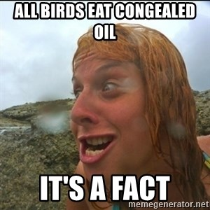 derpy abi - All birds eat congealed oil It's a fact