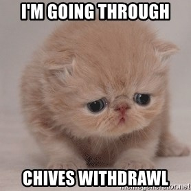 Super Sad Cat - i'm going through chives withdrawl