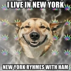 Stoner Dog - I LIVE IN NEW YORK NEW YORK RYHMES WITH HAM