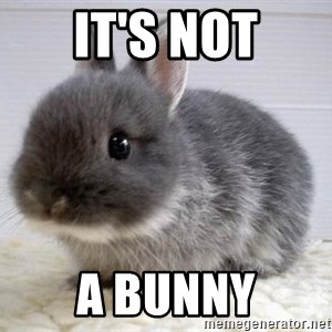 ADHD Bunny - IT'S NOT A BUNNY